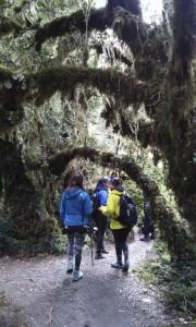 gal1-bosque-11